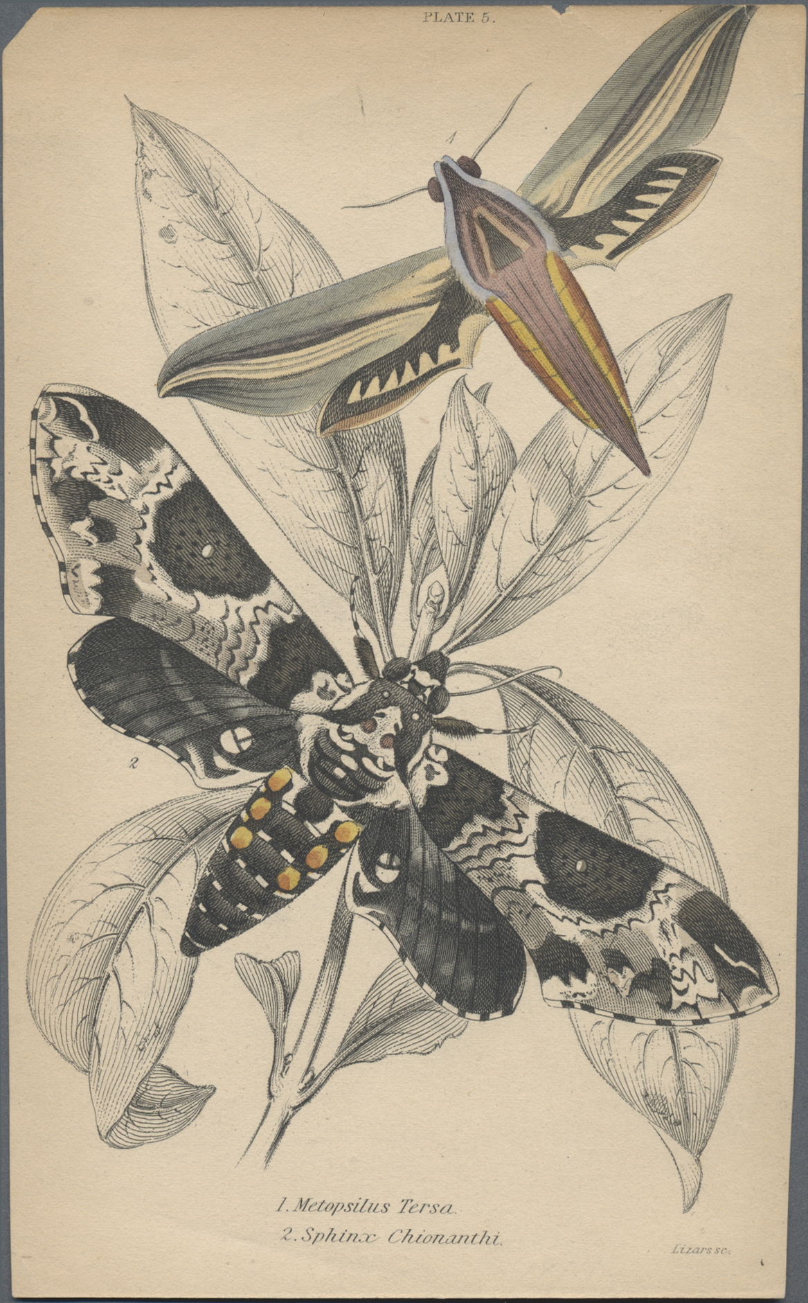 Lot 34879 - thematik: tiere-schmetterlinge / animals-butterflies  -  Auktionshaus Christoph Gärtner GmbH & Co. KG Sale #44 Collections Germany